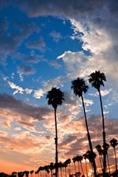 Palm Trees at Sunset in Santa Barbara California USA Journal