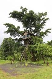 Tree House in the Jungle of Vanuatu Journal