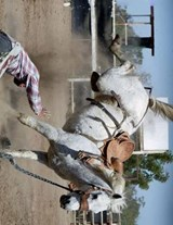 Jumbo Oversized a Cowboy Thrown from the Bronco Horse at the Rodeo | Unique Journal |