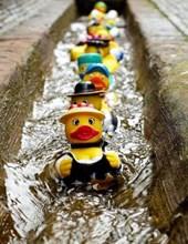 Jumbo Oversized Rubber Ducks Patrolling the Street