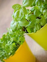 Jumbo Oversized Herbs in Yellow Pots | Unique Journal |