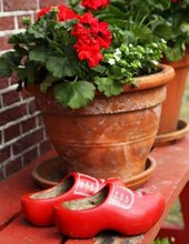 Jumbo Oversized Red Clogs and Planters on a Bench in Holland