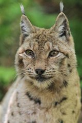Lynx Journal | Cool Image |