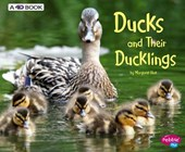 Ducks and Their Ducklings | Margaret Hall |