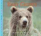 Baby Grizzly | Aubrey Lang |