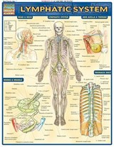Lymphatic System | BarCharts Inc |