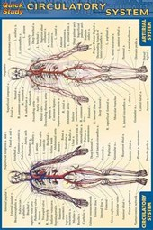 Circulatory System Reference Guide