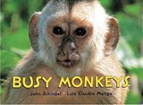 Busy Monkeys | John Schindel |