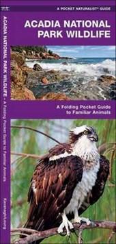 Acadia National Park Wildlife