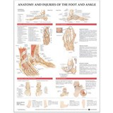 Anatomy and Injuries of the Foot and Ankle |  |