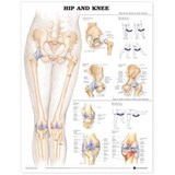 Hip and Knee Anatomical Chart | auteur onbekend |