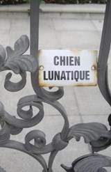 Chien Lunatique | Christopher Bernard |