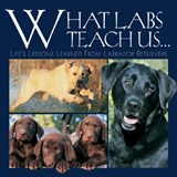 What Labs Teach Us... | Andrea K. Donner |