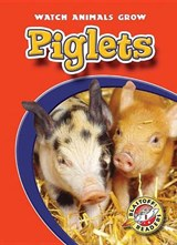 Piglets | Colleen Sexton |