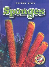 Sponges | Colleen Sexton |