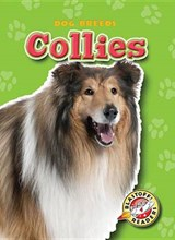 Collies | Sara Green |