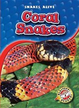 Coral Snakes | Colleen Sexton |