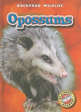 Opossums | Emily Green |