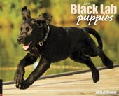 Just Black Lab Puppies Calendar