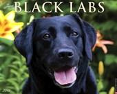 Just Black Labs