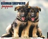 Just German Shepherd Puppies