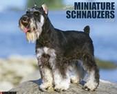 Just Miniature Schnauzers