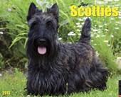 Just Scotties