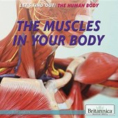 The Muscles in Your Body