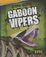 Gaboon Vipers | Chris Bowman |
