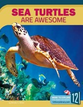 Sea Turtles Are Awesome