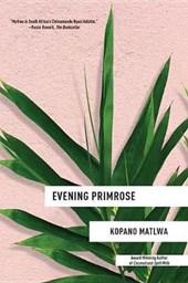 Evening Primrose
