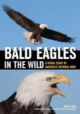 Bald Eagles in the Wild | Jeffrey Rich |