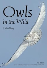 Owls in the Wild | Rob Palmer |