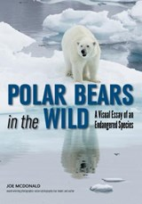 Polar Bears in the Wild | Joe McDonald |