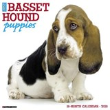 Just Basset Hound Puppies 2018 Calendar | Willow Creek Press |