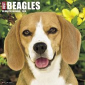 Just Beagles 2018 Wall Calendar (Dog Breed Calendar)