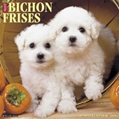 Just Bichons Frises 2018 Calendar