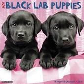 Just Black Lab Puppies 2018 Calendar