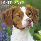Just Brittanys 2018 Wall Calendar (Dog Breed Calendar) | Willow Creek Press |