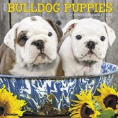 Just Bulldog Puppies 2018 Calendar |  |