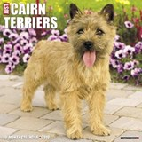 Just Cairn Terriers 2018 Wall Calendar (Dog Breed Calendar) | Willow Creek Press |