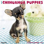 Just Chihuahua Puppies 2018 Calendar