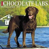 Just Chocolate Labs 2018 Wall Calendar (Dog Breed Calendar) | Willow Creek Press |
