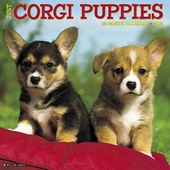 Just Corgi Puppies 2018 Calendar