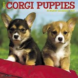Just Corgi Puppies 2018 Calendar | Willow Creek Press |