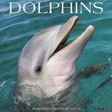 Dolphins 2018 Wall Calendar | Willow Creek Press |