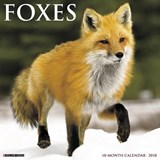 Foxes 2018 Wall Calendar | Willow Creek Press |