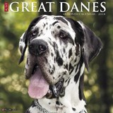 Just Great Danes 2018 Calendar | Willow Creek Press |