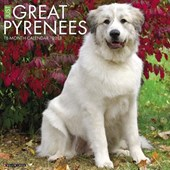 Just Great Pyrenees 2018 Wall Calendar (Dog Breed Calendar)