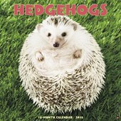 Hedgehogs 2018 Wall Calendar